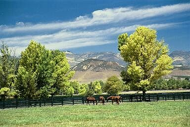horses2_std